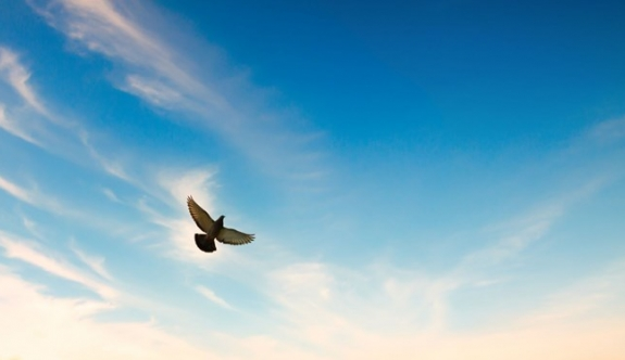 posta güvercini  110 yıllık askeri mesaj getirdi