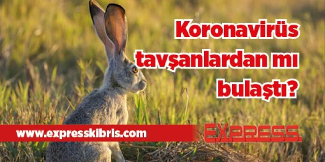 Koronavirüs tavşanlardan mı bulaştı?