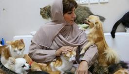 Bir ev 480 kedi ve 12 köpek