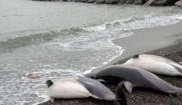 Yunuslar kıyıya vurdu
