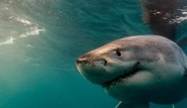 Köpekbalığı sörfçüye saldırdı
